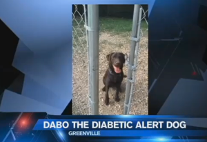 Dabo the Dog (photo: credit Fox Carolina (Meredith Corporation)